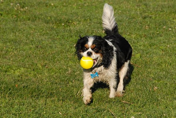 2010-06-11 Denville Dog Park