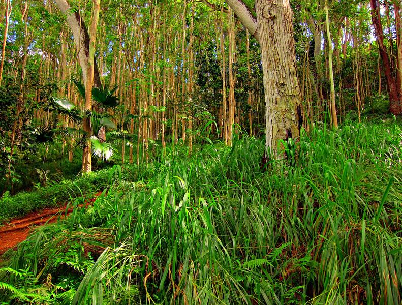 Kauai'10_S90_HDR5TC_29.jpg