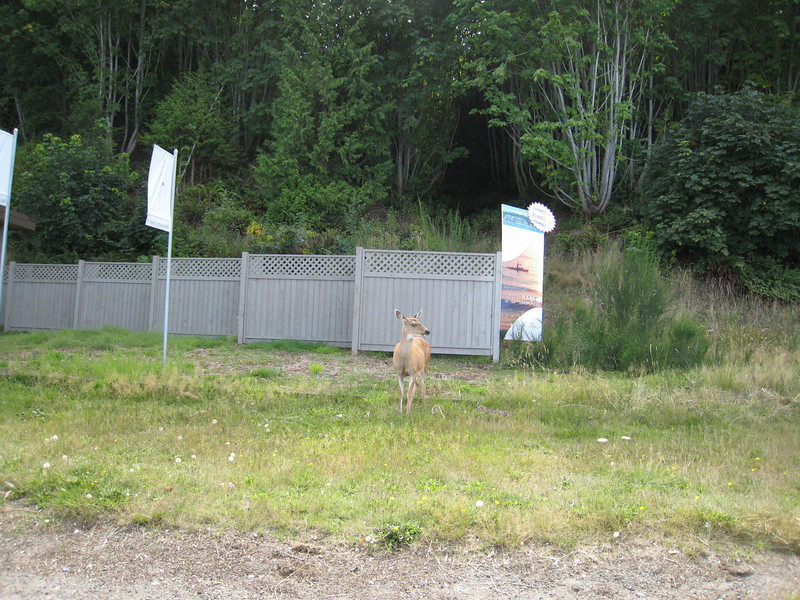Another deer by the road...