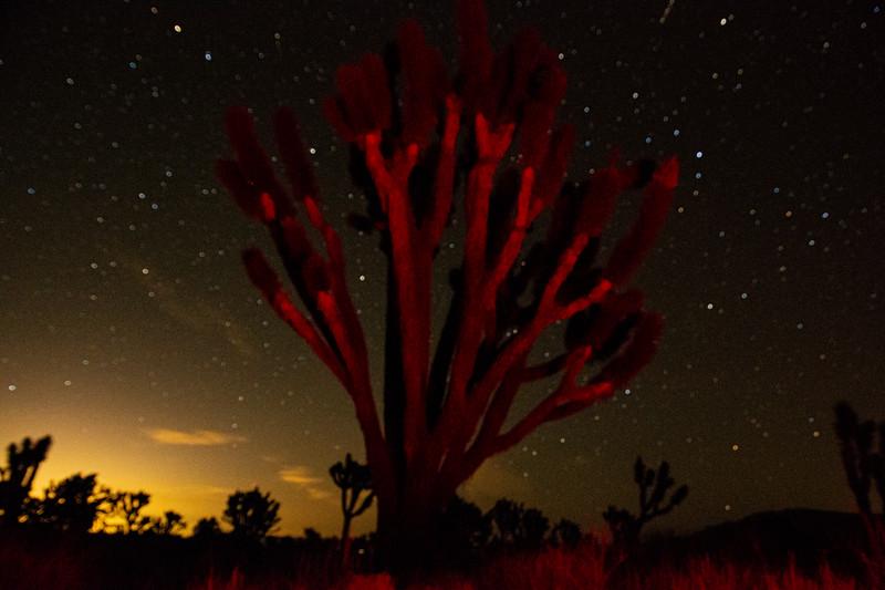 NV Star Light.jpg