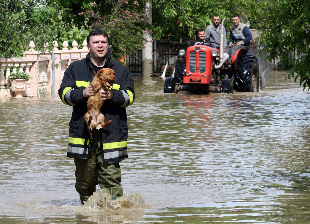 Description of . A Serbian rescuer carries a dog through  flooded street in the village of Obrez, near the central Serbian town of Varvarin, south of Belgrade, on May 17, 2014. Deadly floods across Bosnia and Serbia have claimed at least 14 lives and led to the evacuation of 15,000 people after the Balkans suffered its heaviest rainfall in a century, officials said on Saturday. (SASA DJORDJEVIC/AFP/Getty Images)