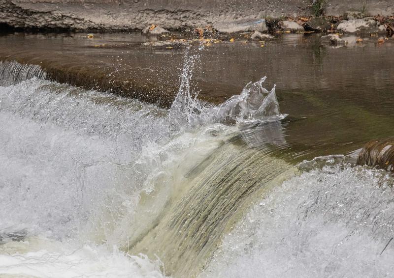 salmon upstream (34 of 48).jpg