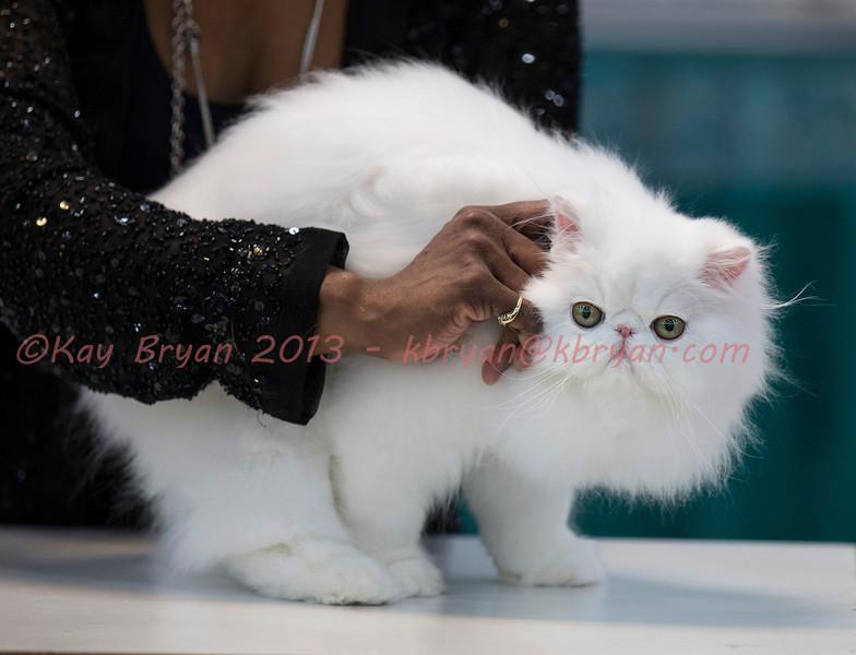 CatShow2014068_1.jpg