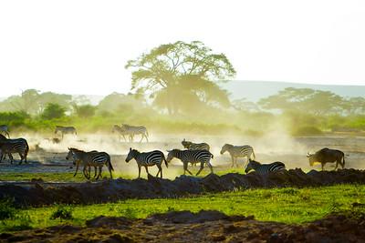 Kenya - Amboseli National Park - 3-20-12