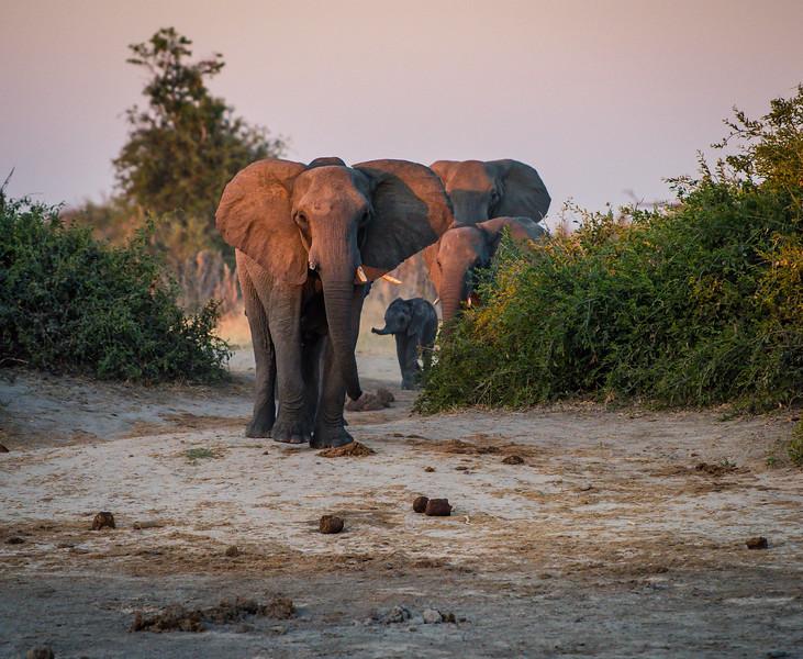 Botswana_June_2017 (4232 of 6179).jpg