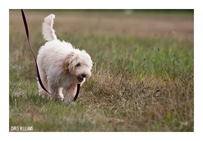Cody at Tri-State (Lax dog)