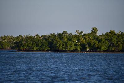 9AM Mangrove Tnnel Kayak Tour - Eignen & Job
