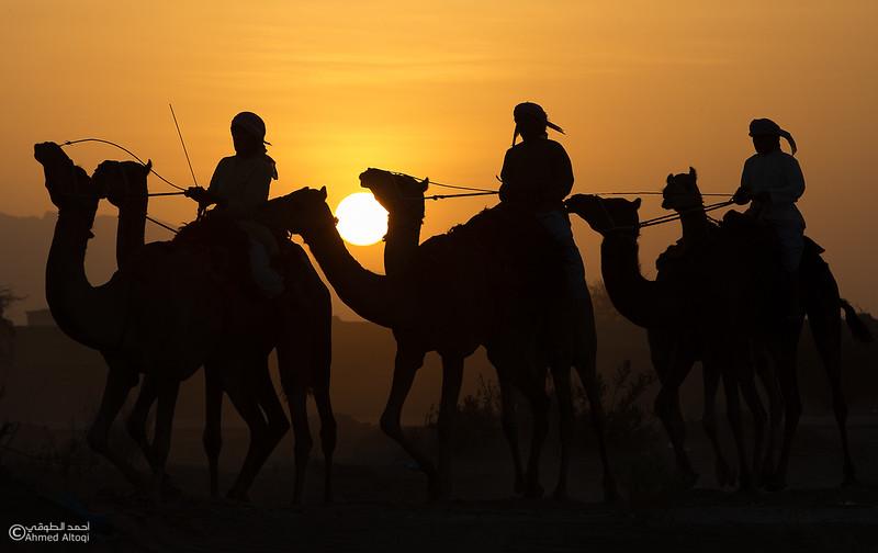 IMGL9296- Camel Race.jpg