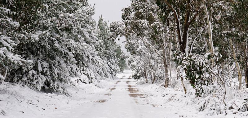 Australian Bush Under Snow