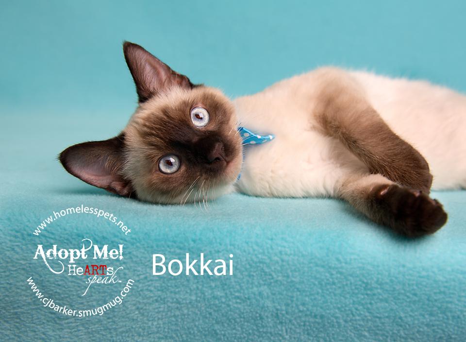 Bokkai