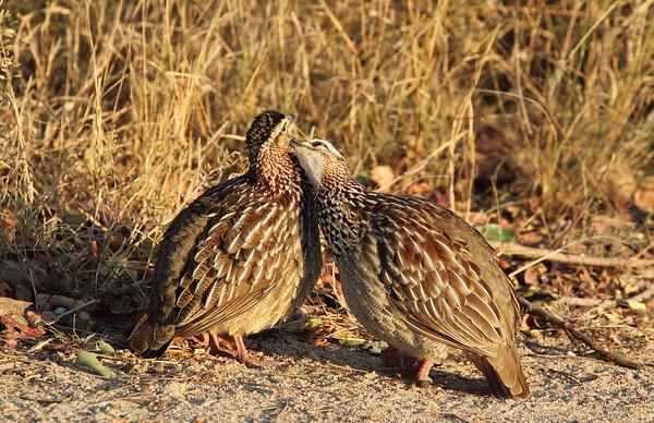 Kruger National Park - 2011 - South Africa
