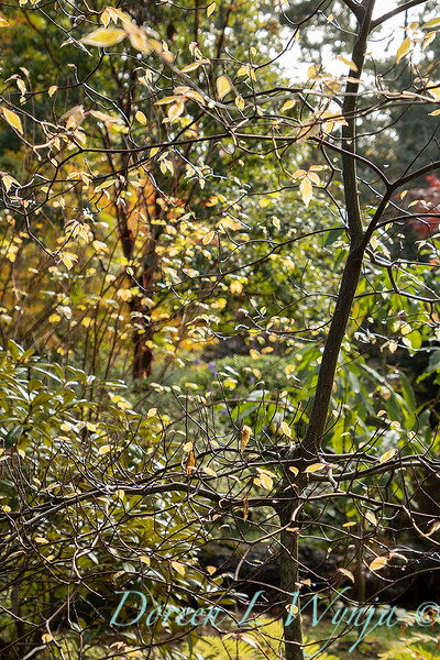 Dietrick fall garden_2111.jpg