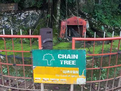 Chain Tree 🔒