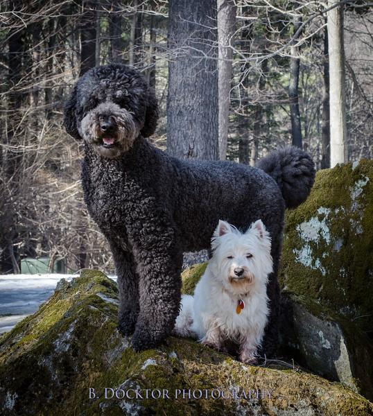 1504_Bear and Charlie_064.jpg