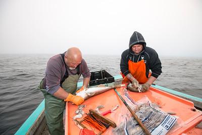 Handline Fish