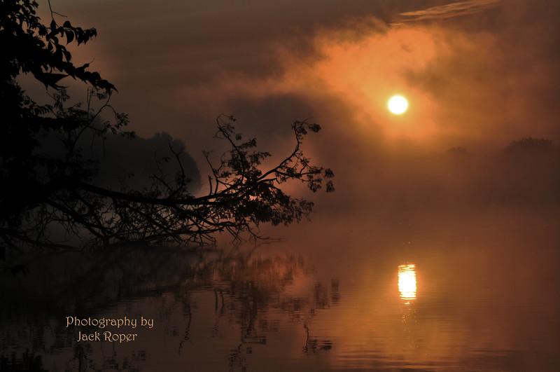 Tree and fog 6483.jpg