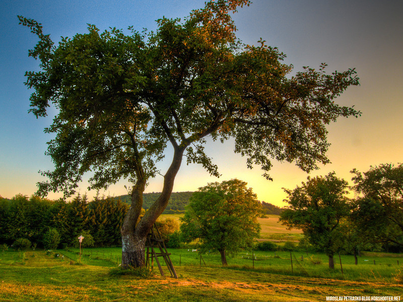 Sunset-Tree-1600x1200.jpg