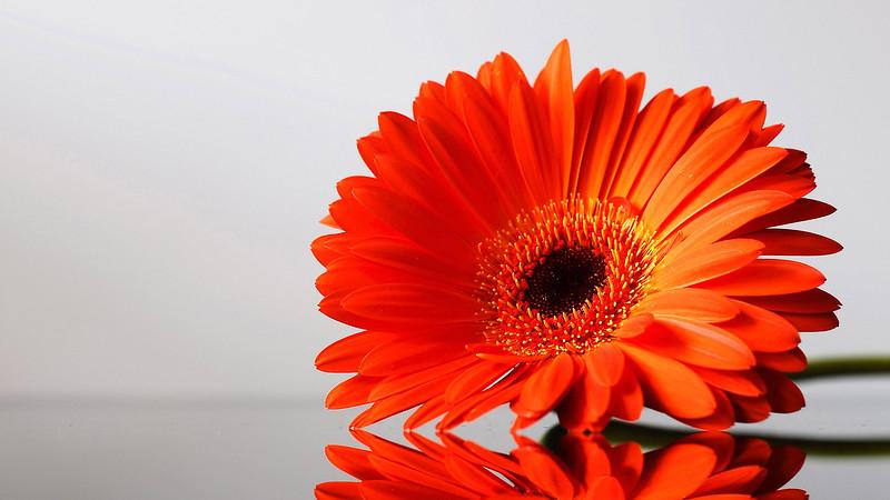 Flowers2 1920x1080 (15).jpg