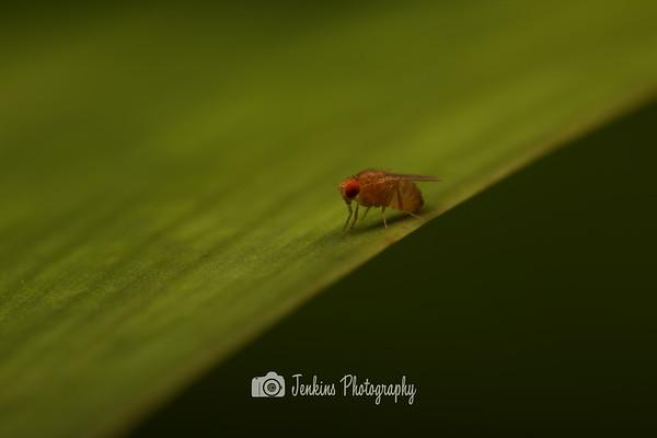 2012-12-19 Botanical Rainforest