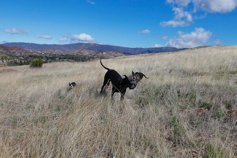 dogs_vasquez_061.jpg