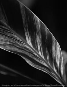 015-leaf-dsm-14jan09-cvr1-bw-1210