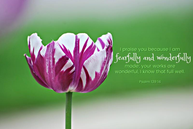 19_Psalm139-14_BS_2013-5-17.jpg