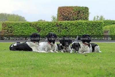 Messe Hund & Katze in Dortmund