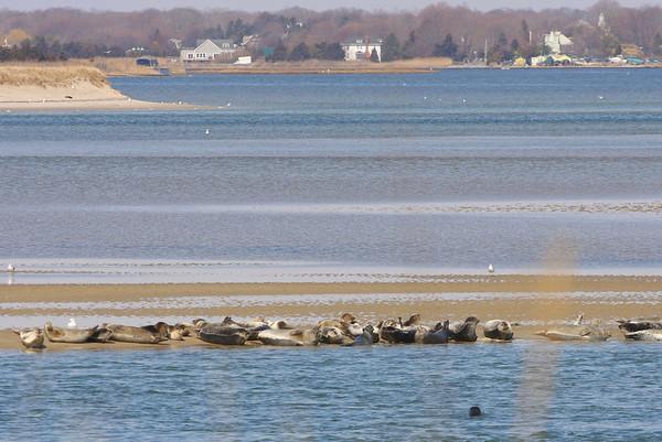 2009 - Seals