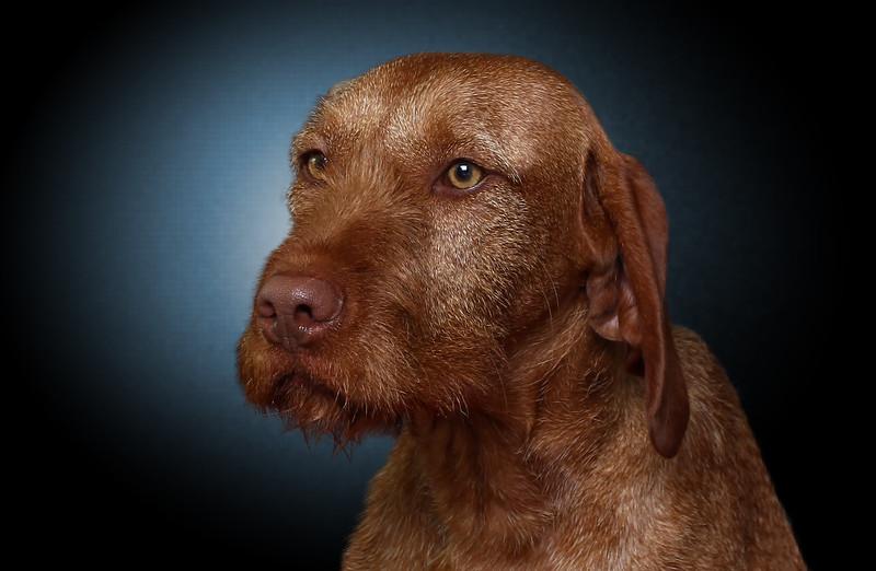 saule-dog-2.jpg