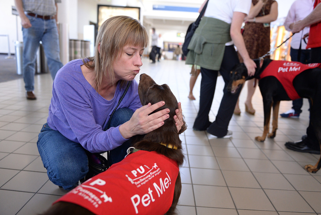". Laura Larsen of West Hollywood kisses ""CC\"" New program at LAX called PUP (Pets Unstressing People) uses certified dogs to walk the terminals with their volunteer owners to greet passengers and help ease the tensions of modern airline traveling.   Photo by Brad Graverson 4-11-13"