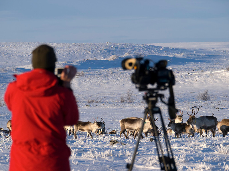 Al in action filming the reindeer.