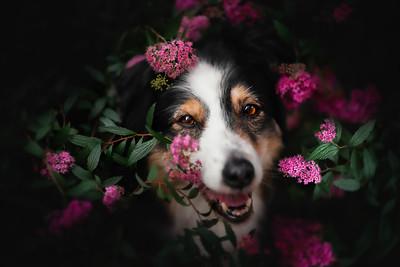 Dogs - Portfolio