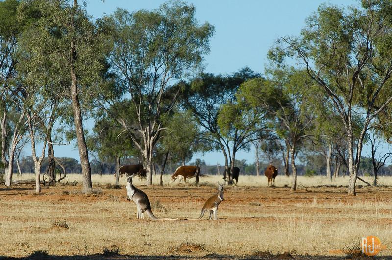 Australia-Queensland-Cunnamulla-4377.jpg