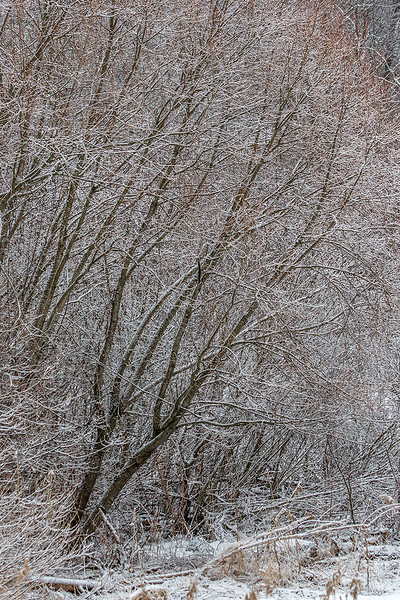 20170304-5362-Or-frost.jpg