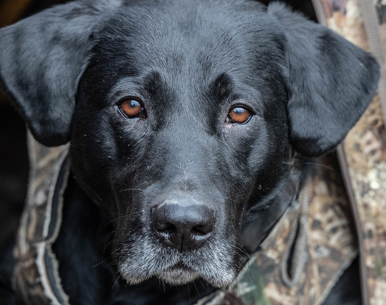 Cooper on a Kansas waterfowl hunt