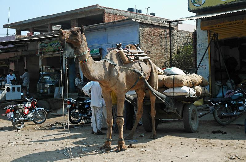 India 2009-067.jpg