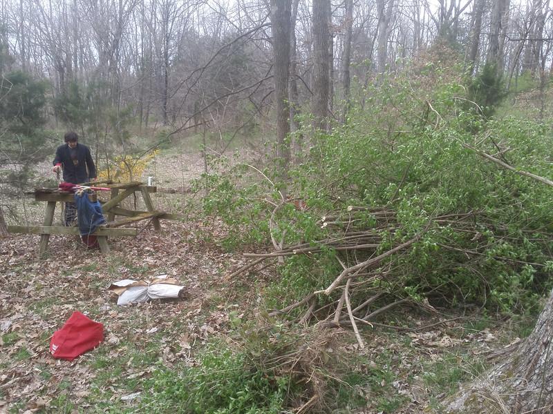 removing large bush honeysuckle.  Makes quite a pile.
