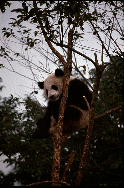 Tibet_Shanghai2_022.jpg