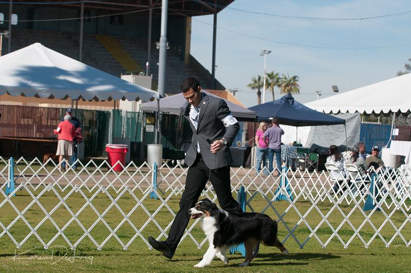 20170205_Australian Shepherds_Lost Dutchman Kennel Club-107.jpg