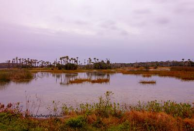 Orlando Wetlands Park - Christmas, Florida
