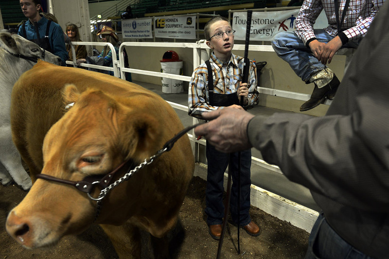 """. Braden West, of Sheridan, WY, talks with his father, Justin, before showing his steer in the Open Prospect Steer Show at the National Western Stock Show in Denver, CO, January, 26, 2013. Braden said he was excited about his first showing at the stock show, \""""I was kind of nervous, I was worried about him a little. But it\'s exciting, I got to show once and I won a ribbon.\"""" The pair placed 6th in their class. (Photo By Craig F. Walker / The Denver Post)"""