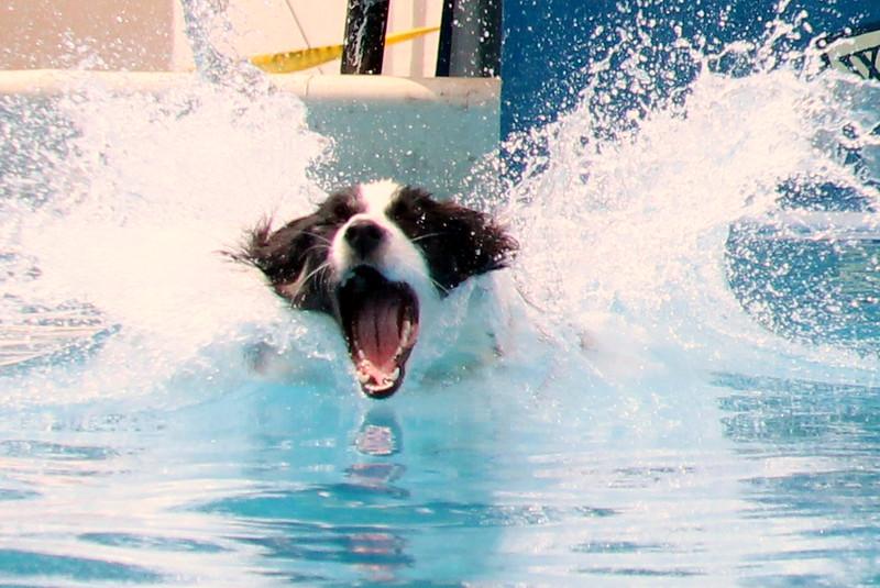 2015.8.6 Winnebago County Fair Dock Dogs (77).JPG