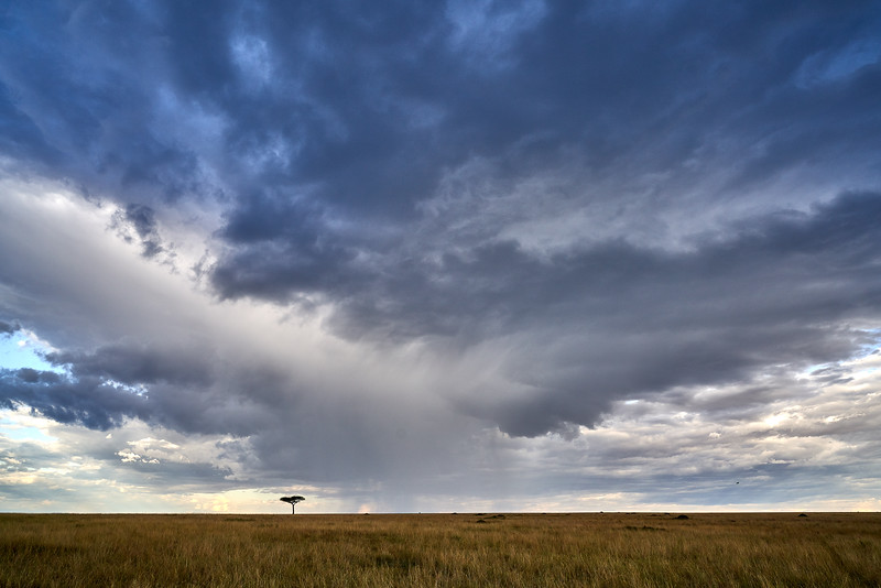 Maasai Mara_DSC08812.jpg