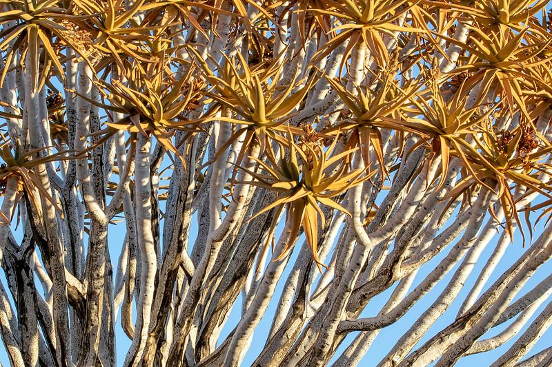 Namibia 69A3615.jpg