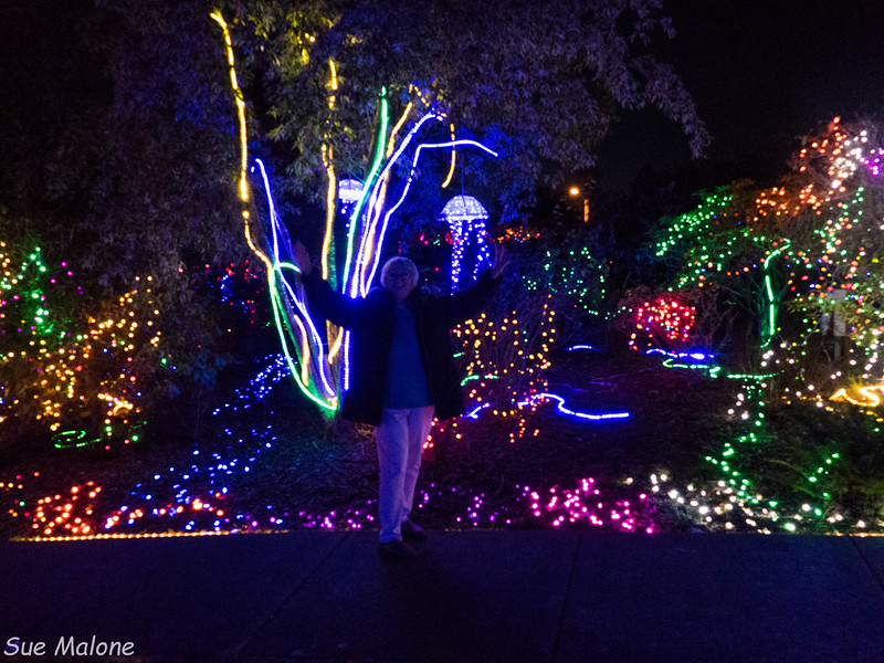 Lights in Brookings-23.jpg