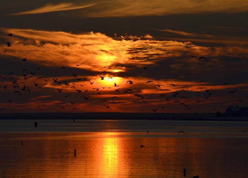 sunset gulls.jpg