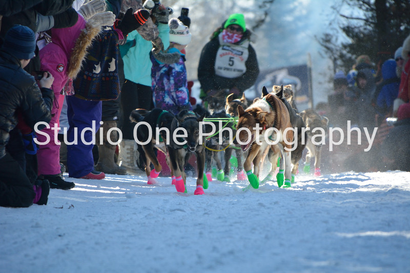 John Beargrease Sled Dog  2017