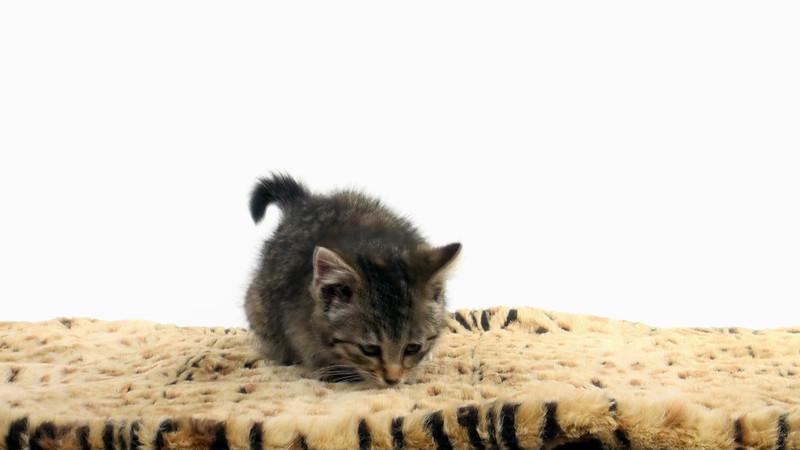 kitten_104_01.mov