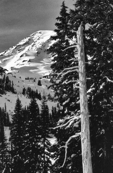 Snags serve as cavity nesting habitat for birds living near Mt. Rainier, WA.