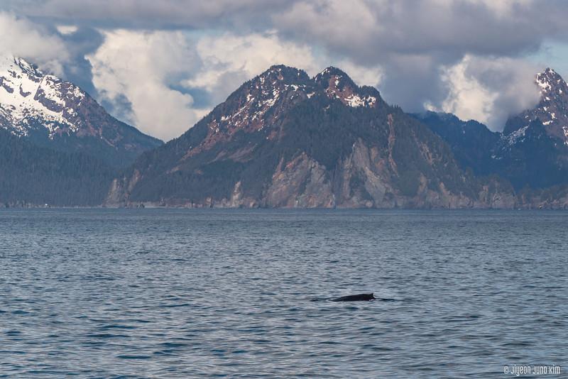 Kenai Fjords 360 Inaugural Cruise-6108312-Juno Kim.jpg